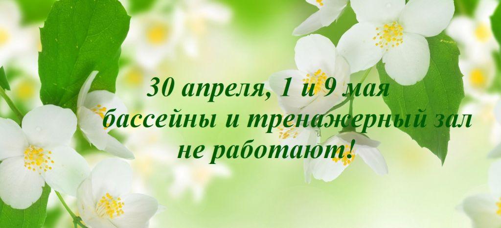 Jasmine-Blossom-2880x1920